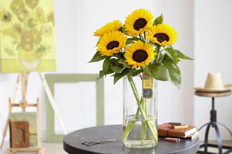 Tournesol 'Sunrich-Van Gogh's Favorite' en vase dans un studio, tableau de Van Gogh en arrière plan