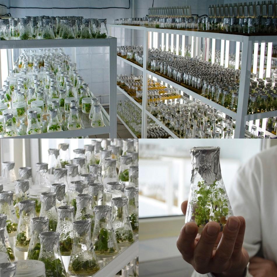 4 photos de plantes en fioles dans un laboratoire blanche