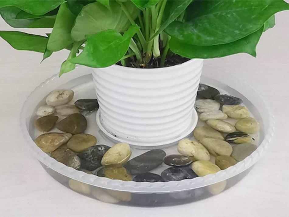 Plante en pot qui trempe dans une soucoupe d'eau.