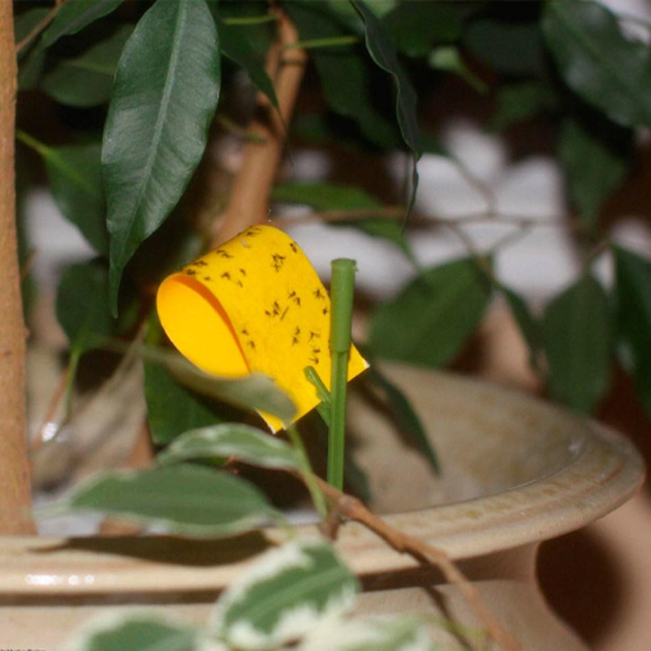 Piège collant jaune avec des mouches du terreau.