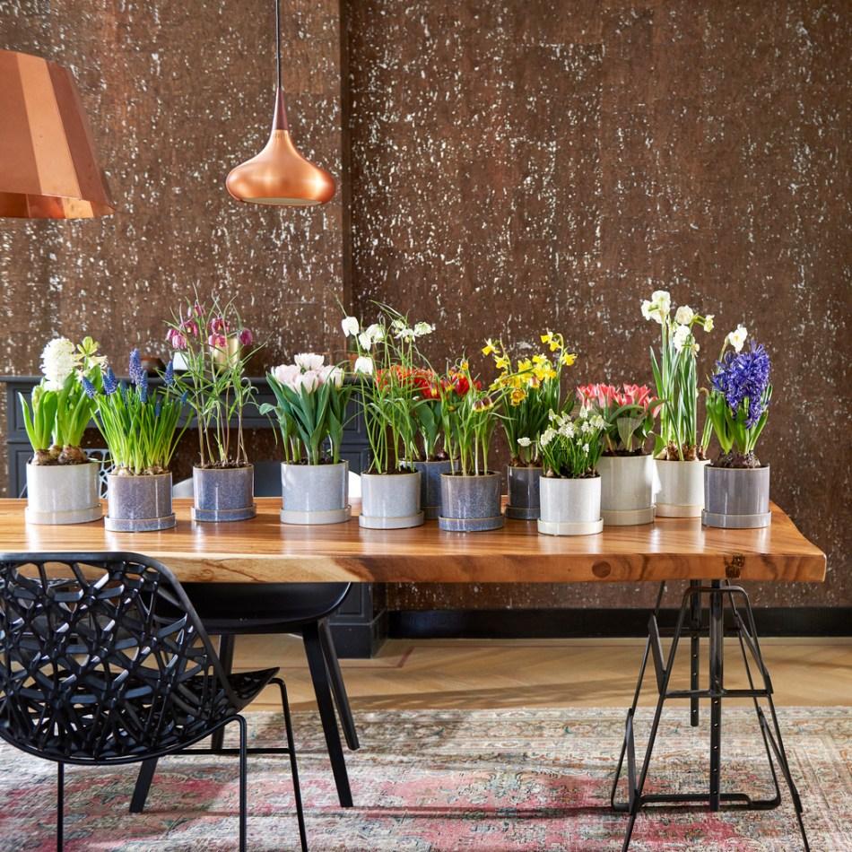 Mélange de bulbes en pot, y compris tulipes, jacinthes de raisin, jacinthes, narcisses et fritillaires, sur une table.