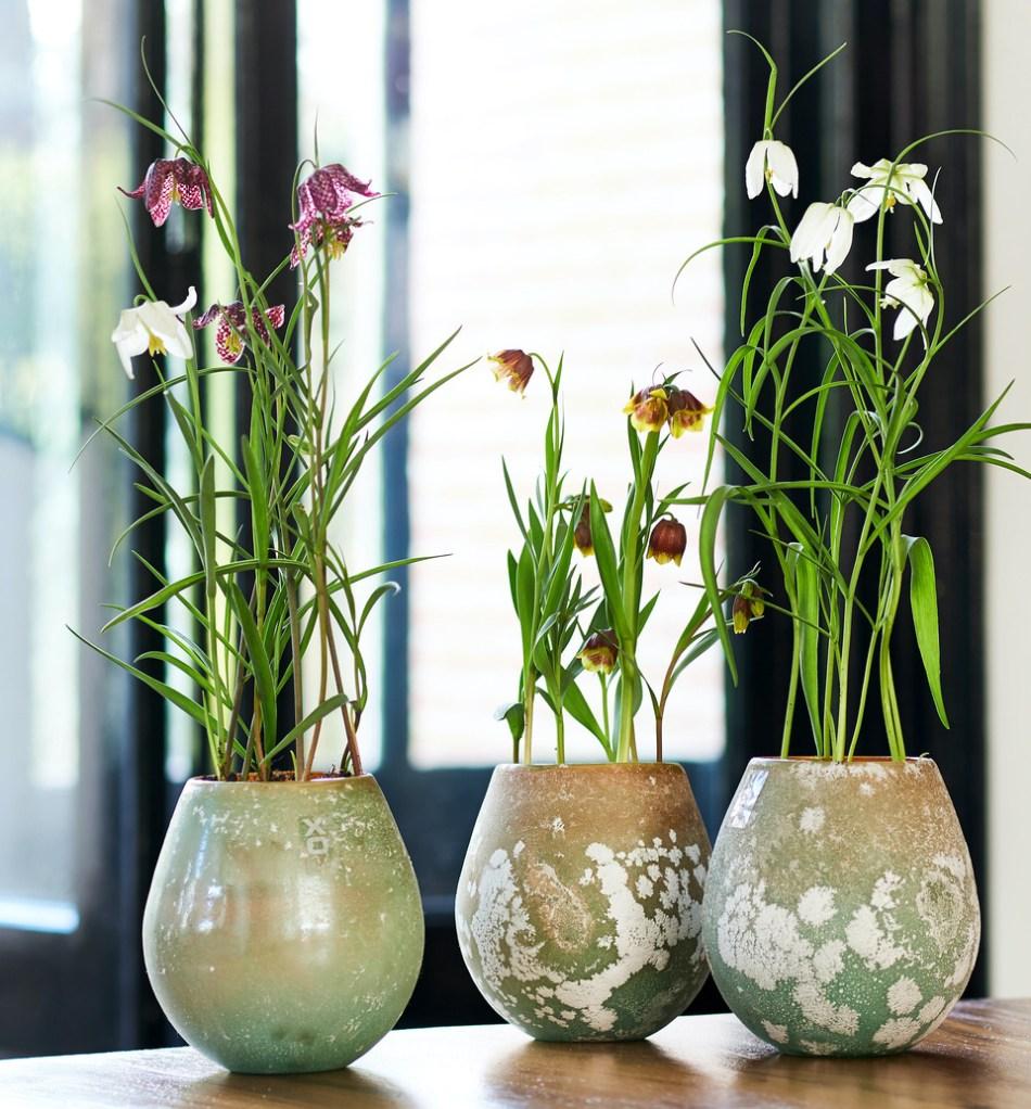 Trois fritillaires différentes dans des pots décoratifs sur une table.