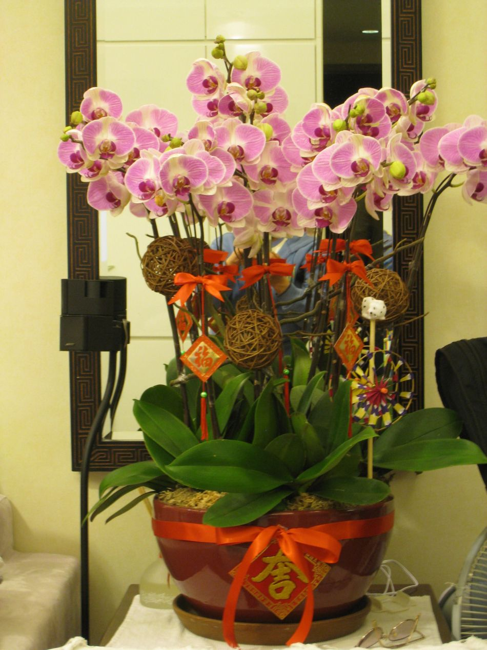 Orchidée Phalaenopsis portant des décorations chinoises.
