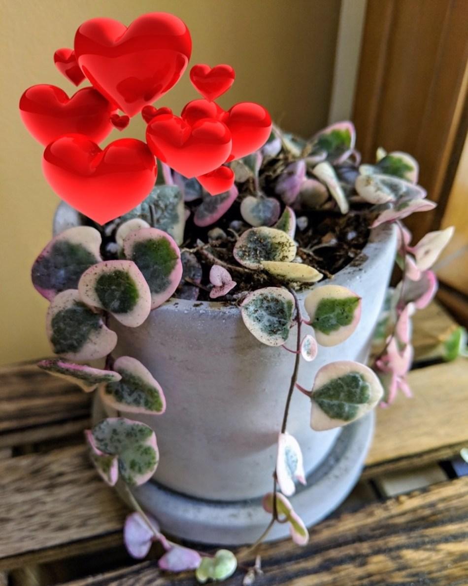Chaîne de cœurs panachée avec surimpression des cœurs rouges pour la Saint-Valentin.