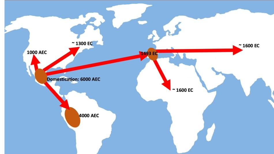 Carte indiquant la diffusion du haricot à travers le monde à travers les millénaires
