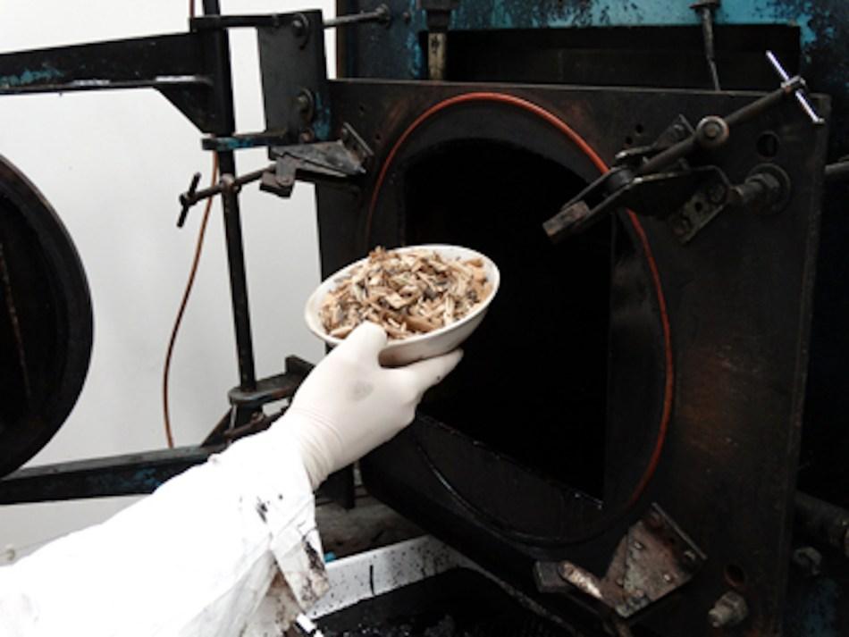 Bol de copeaux de bois de fruitier qui seront mis dans un pyrolyseur.