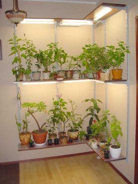 Diverses plantes poussant sous des lumières fluorescentes dans un sous-sol.
