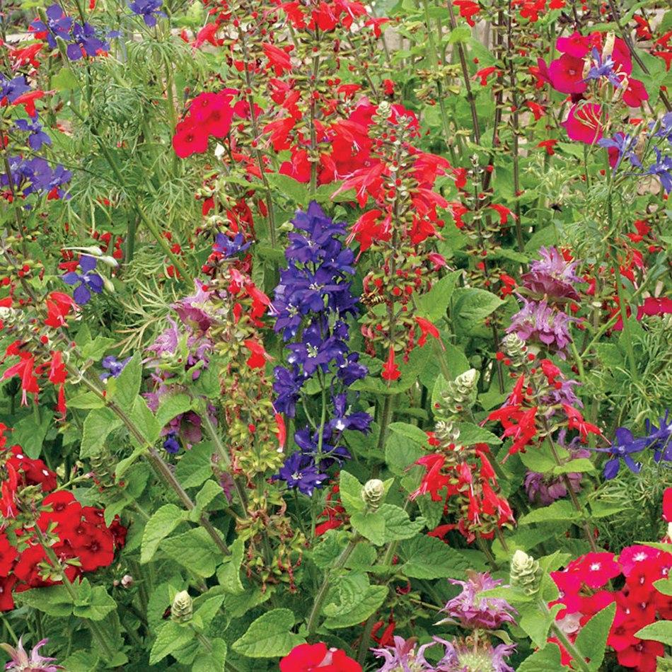 Plate-bande remplie de fleurs.