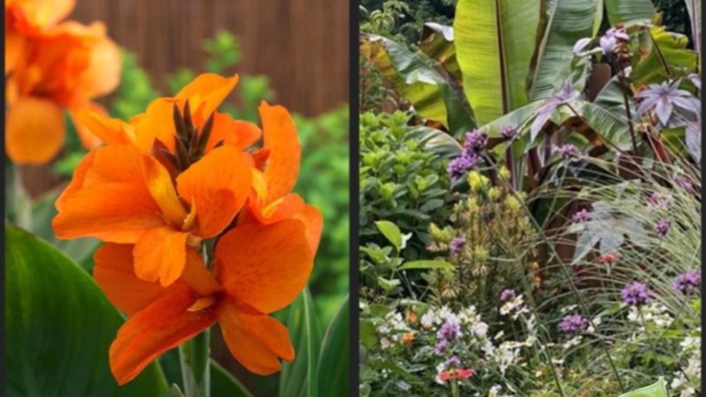 Fleurs de canna orange et aménagement tropical avec bananier.