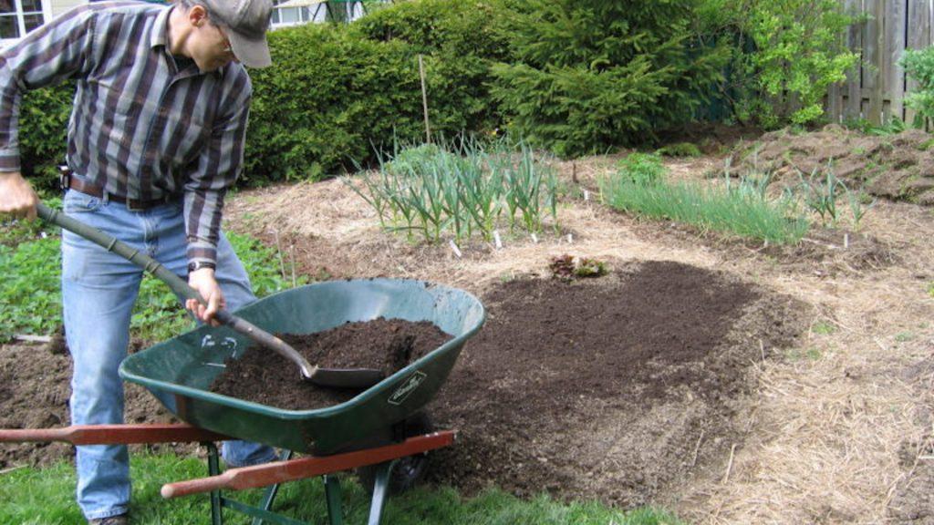Homme qui pellette du compost à partir d'une brouette.