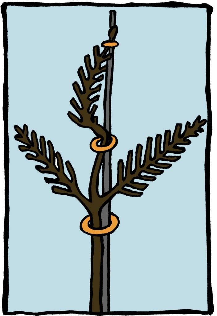 Branche fixée sur un tuteur pour devenir une flèche.