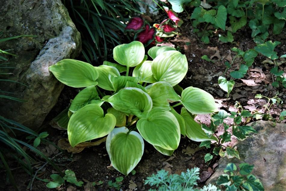 Jardin ombragé avec plantes panachées