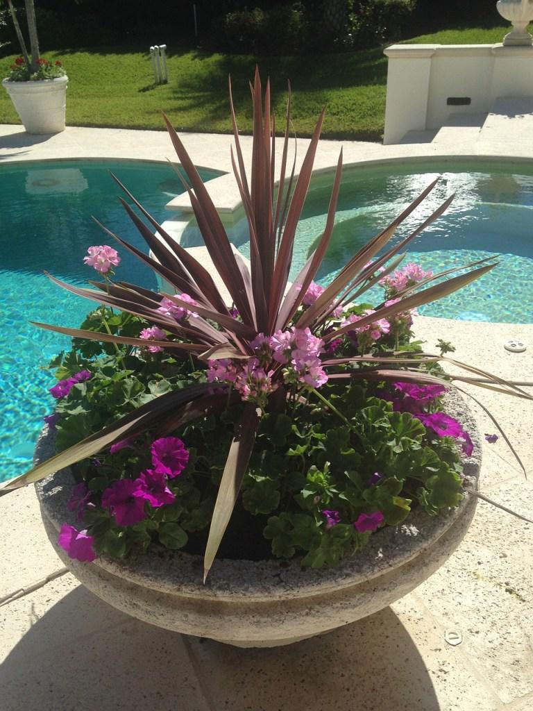 Jardinière d'allure tropicale près d'une piscine.