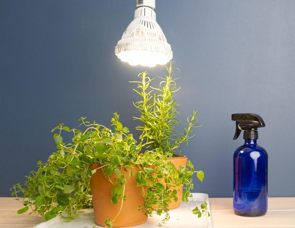 Ampoule horticole DEL SANSI 36W