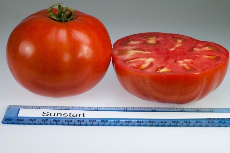 Tomate Sunstart