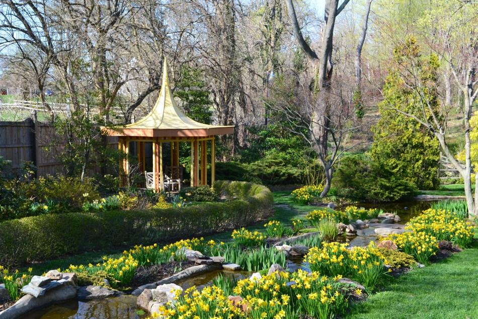 Le Jardin jaune avec narcisses.
