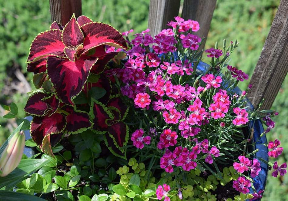 Mixed annuals.