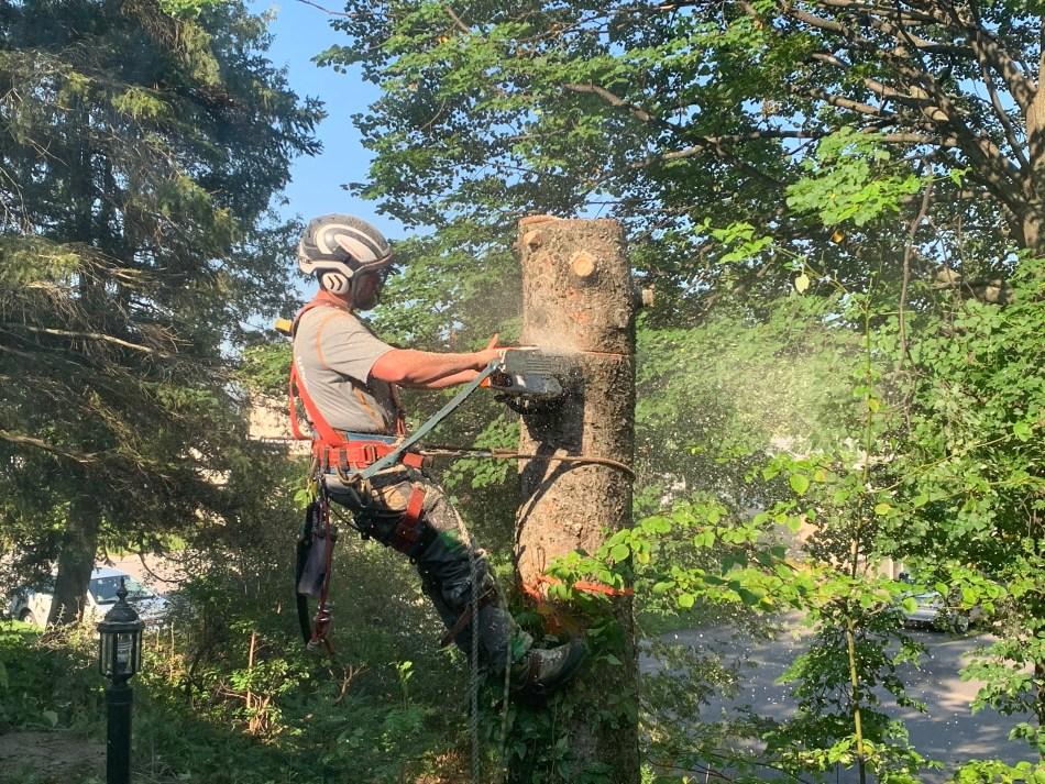 Arboriculteur qui scie une section de tronc à la tronçonneuse.