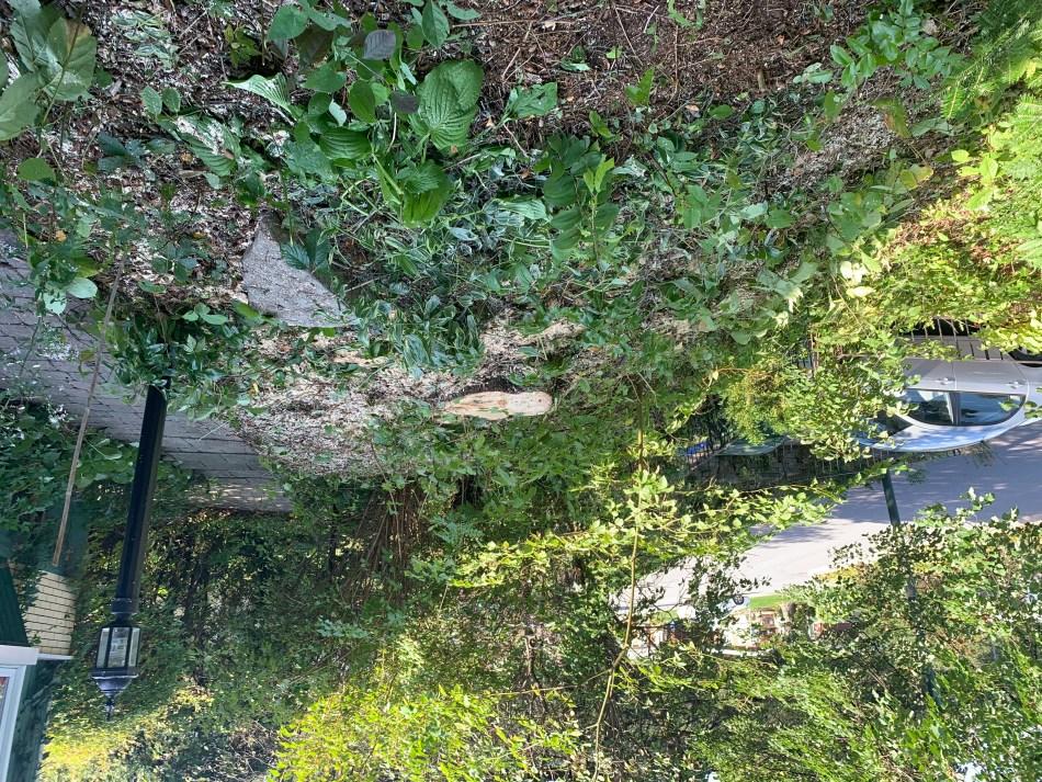 Jardin d'ombre après l'abattage d'un arbre.