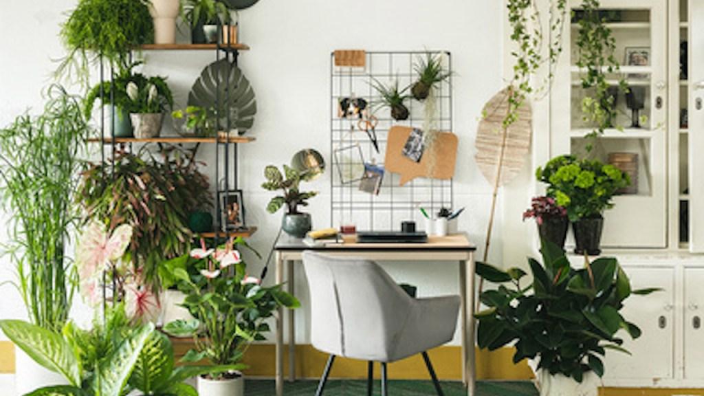 Bureau de télétravail avec plantes d'intérieur