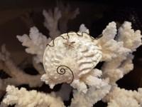 Pendentif en coquillage serti de fil de métal argenté, INDE - Prix de vente : 18€.