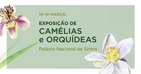 Exposição de Camélias e Orquídeas em Sintra