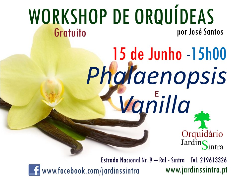 Workshop Orquídeas