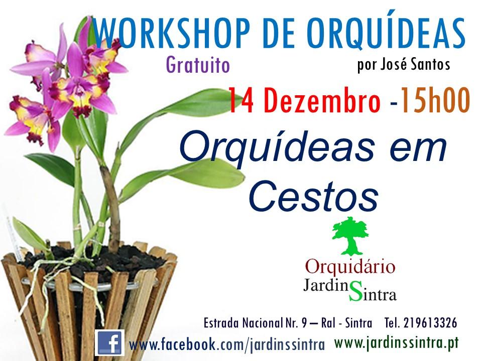 Workshop de Orquídeas – Cultivo em Cestos