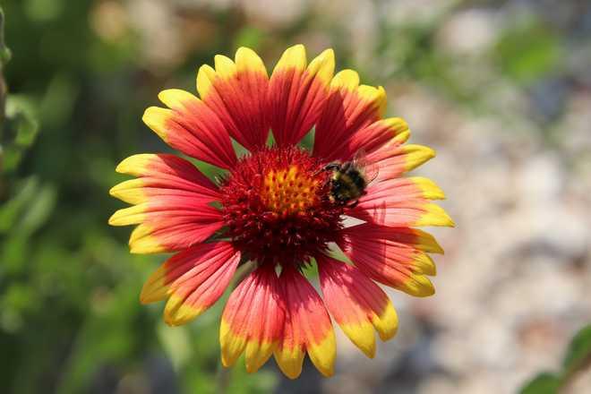 6 plantes de plein soleil sans arrosage