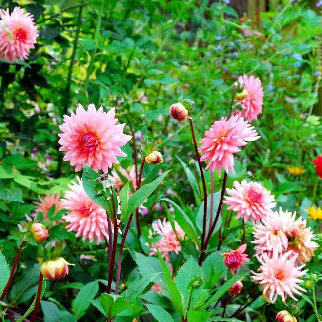 un massif de plantes vivaces