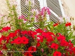 wpid-20120803-Yonne-Clamecy-bac-fleuri-2.jpg