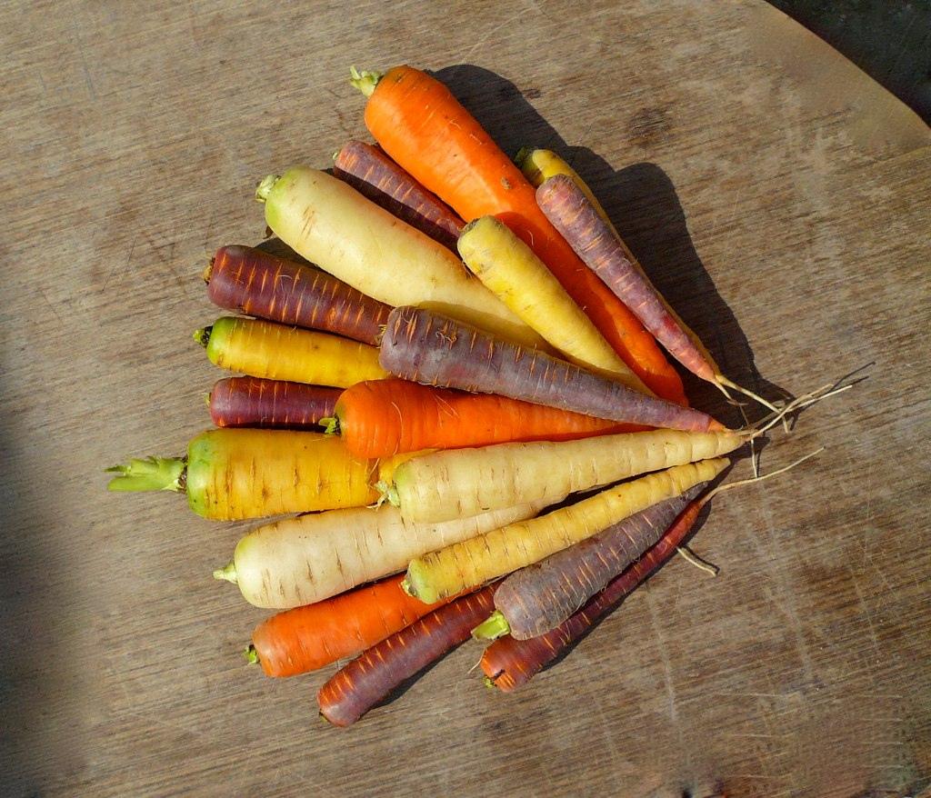 O trouver des carottes de couleurs varies   Jardissimo