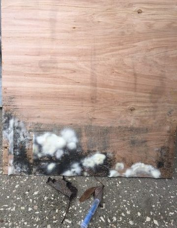 Black Mold Myths and Facts, | Ponte Vedra FL | JARDY ...