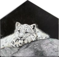 """Snow Leopard Respite"" Colored Pencil on Wood 24"" x 24"" $1150"