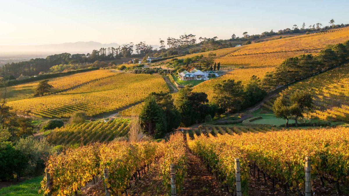 Spotlight on 3 Constantia Wine Farms