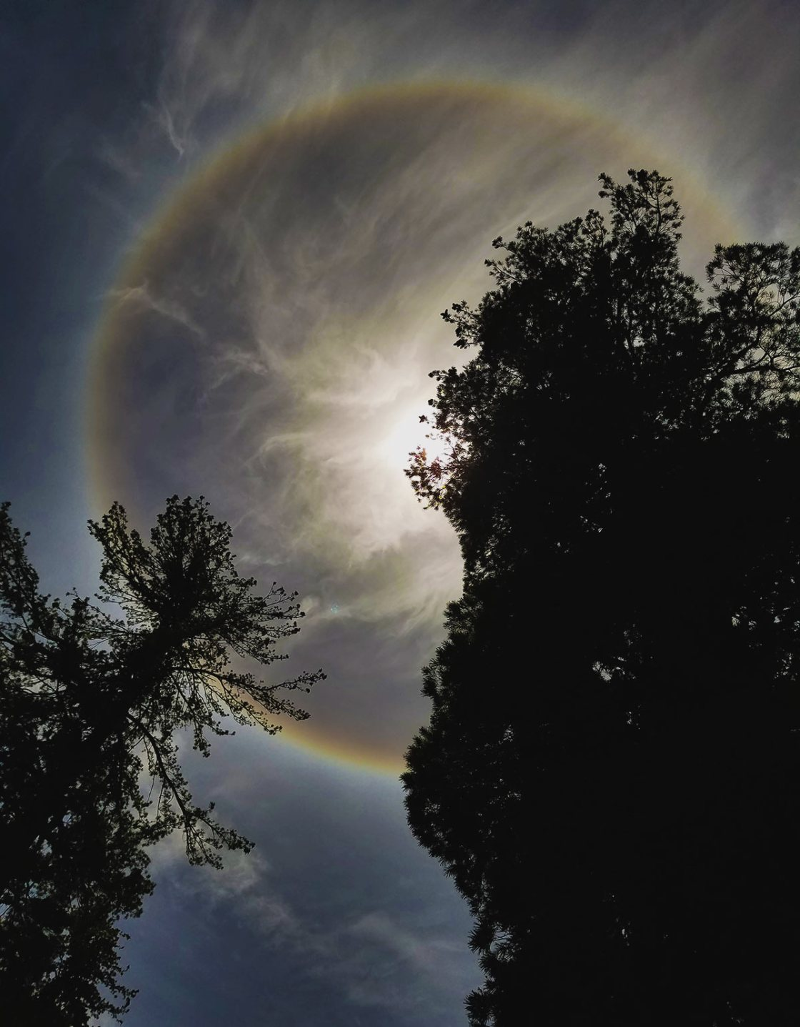 Rainbow halo around the sun and silhoutted trees