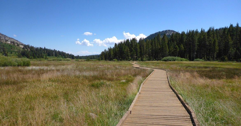 Wooden boardwalk at Tahoe Meadows