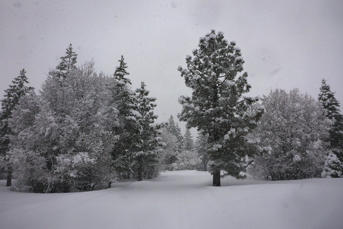 Overcast skies, snow-covered trees, and groomed cross-country ski tracks