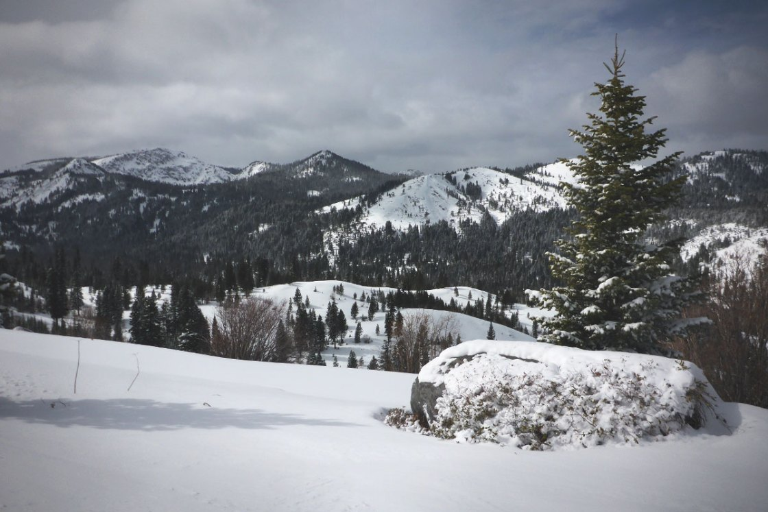 Snow-covered mountains and pine trees