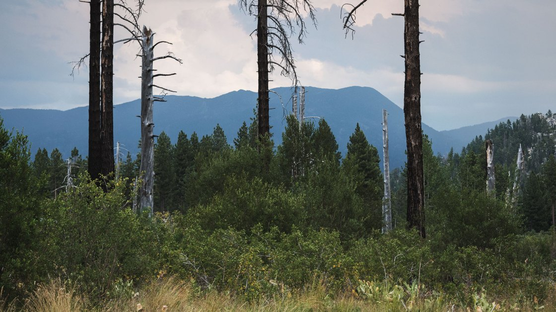 Forest, mountains, and wildfire smoke