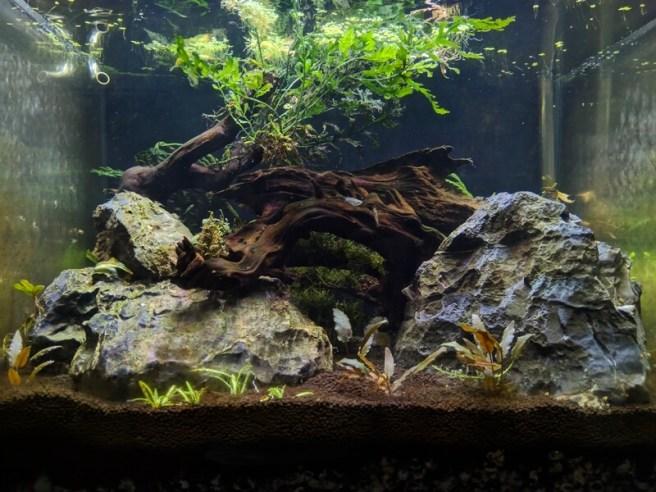 2018.5.19 接下來要透過持續換水的方式觀察藻類狀況