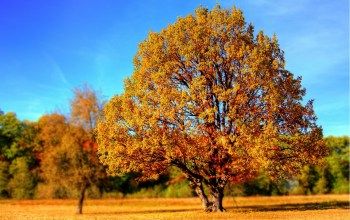 Be A Tree