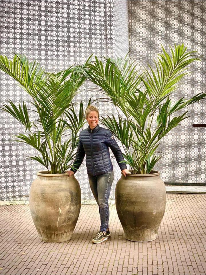 Zijden planten