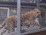 大人の女の疲れは猛獣で癒す「福岡市動植物園 ~動物園編~」