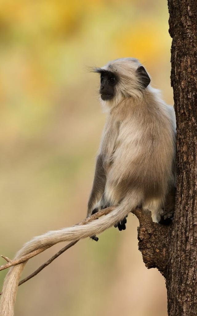 Bandhavgarh National Park Madhya Pradesh India