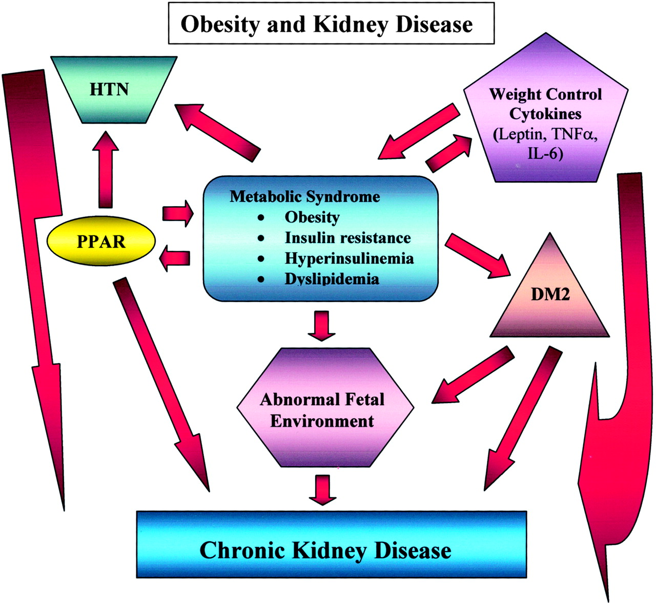 medium resolution of overview obesity what does it have to do with kidney disease american society of nephrology