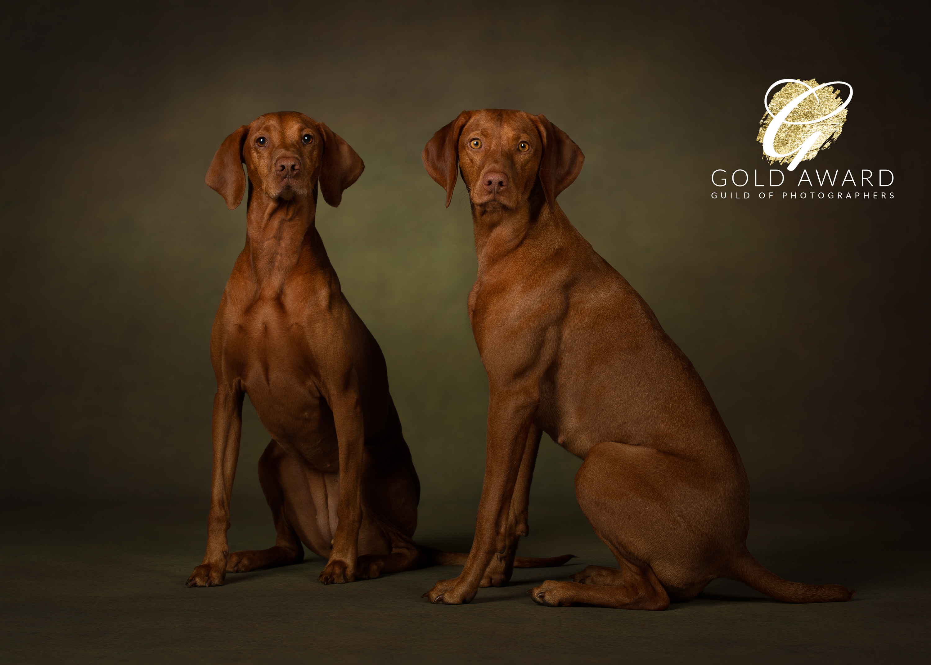 Luna and Willow, Hungarian Vizslas by Jason Allison Pet Photography