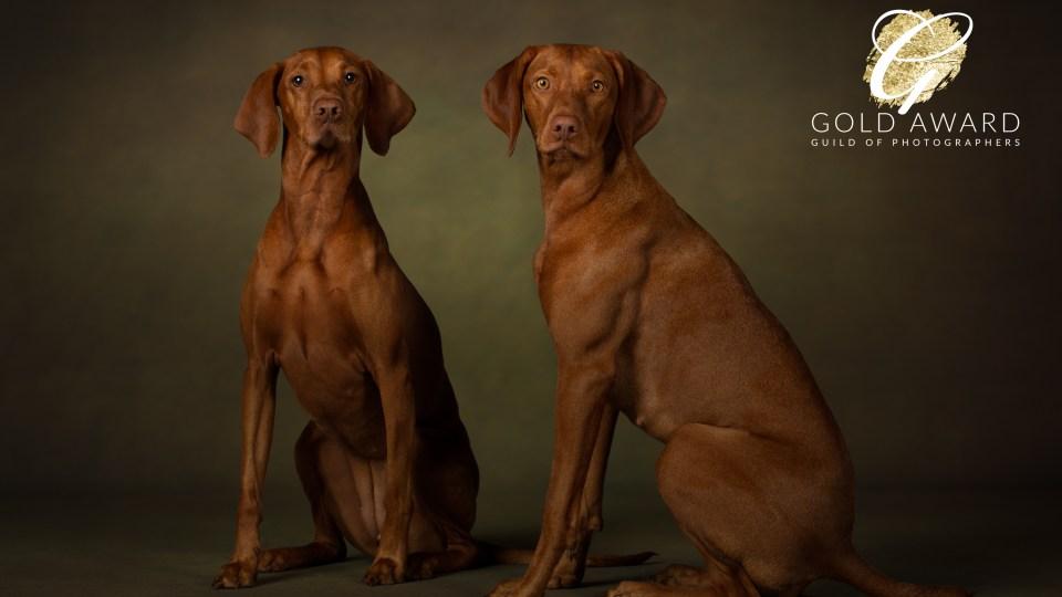 Luna and Willow, Hungarian Vizslas by Jason Allison Pet Photography