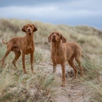 Outdoor Dog Photography on the beach by Jason Allison Photography