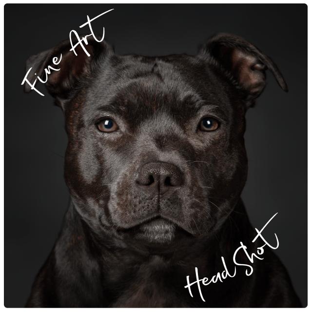 Fine Art Head-Shot Portrait